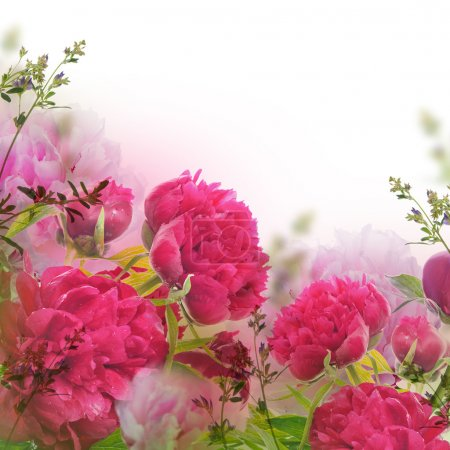 Bouquet of pink peonies, floral background...