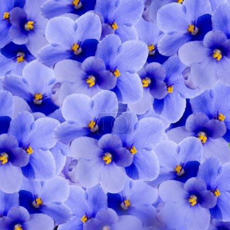 Bouquet of spring violets, floral background...