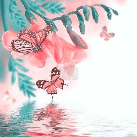Photo pour Roses printanières et papillons, fond floral - image libre de droit