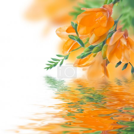 Primroses and water