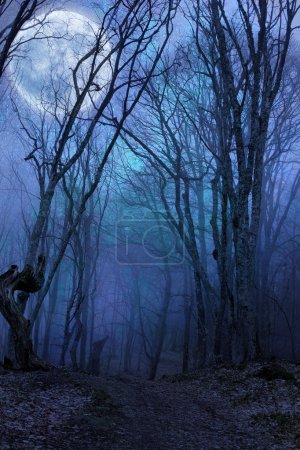 Photo for Dark night forest agaist full moon - Royalty Free Image