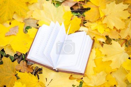 Photo pour Livre ouvert posé en feuilles jaunes - image libre de droit