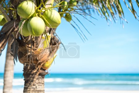 Coconut palm with sky and ocean background.