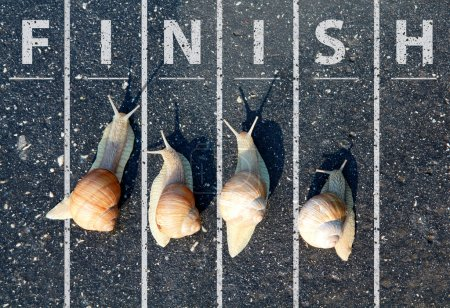 Photo for Snail run near the finish line - Royalty Free Image