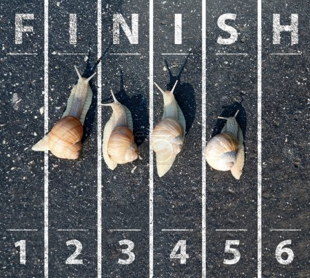 Snails run near the Finish line