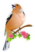 Bird on the flowering branch