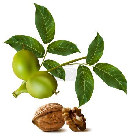 Circassian walnuts