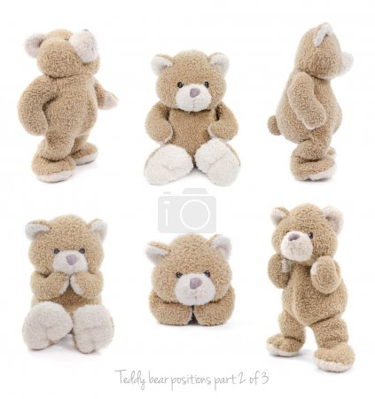 set of teddy bear positions