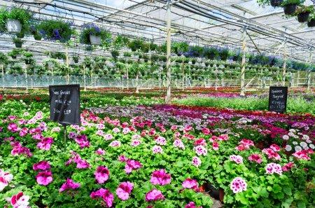 Garden center flower market