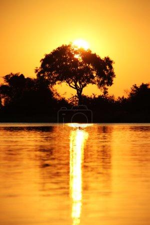Photo pour Coucher de soleil sur le paysage africain ou la savane - image libre de droit