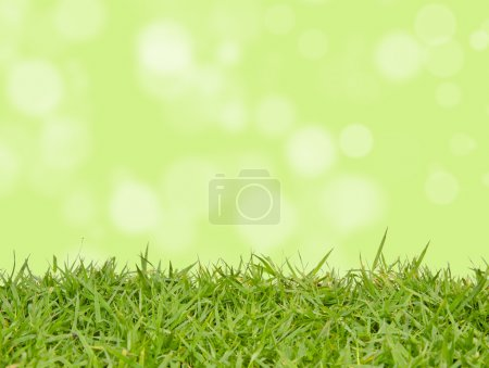 Green grass with abstract background blurring