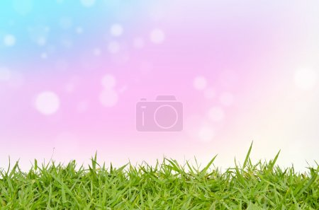 Green grass and abstract background blurring
