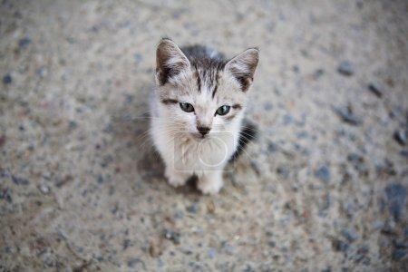 Photo pour Triste petit chaton sans abri dans la rue - image libre de droit