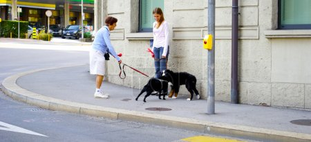 with dogs met on the street