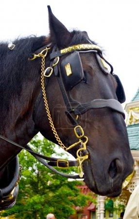Portrait of a horse
