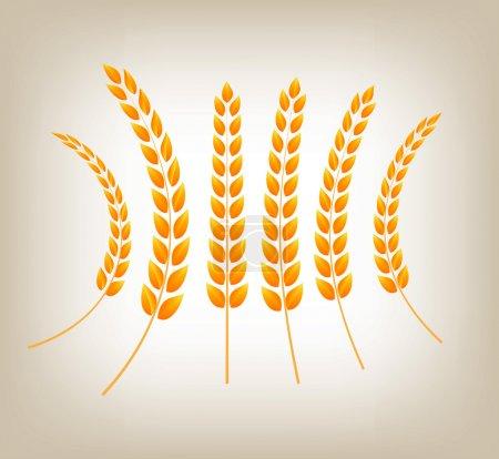 Vector golden wheat heads