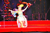 Papoušci v cirkuse aréně