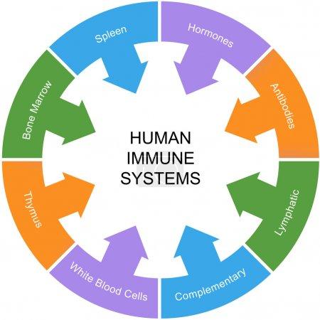 Photo pour Système immunitaire mot cercle concept avec excellentes conditions tels que rate, hormones, anticorps, etc.. - image libre de droit