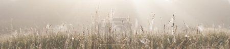 Photo pour Panorama d'un champ d'herbe ou de foin avec toiles d'araignée par une matinée brumeuse au lever du soleil - image libre de droit