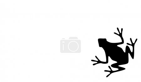 Illustration for A Silhouette of a Black Frog on White Background - Royalty Free Image