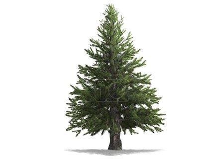 Photo pour Un pin isolé avec fond blanc - image libre de droit