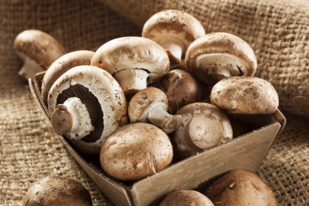 Photo for Organic Brown Baby Bella Mushrooms against a background - Royalty Free Image