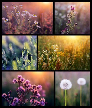 Photo for Collage with beautiful flowers in the sunshine - Royalty Free Image