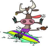 Cartoon Cow Surfer