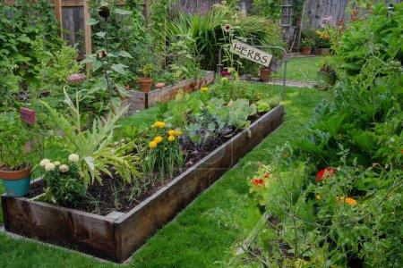 Photo pour Un lit surélevé rempli d'herbes et de légumes est niché dans le Centre des deux autres jardins étroits. Ajoute un signe rustique, agréable et accent artistique. - image libre de droit