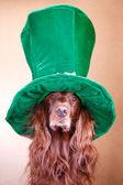 červený pes v klobouku