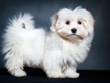 Animal dog