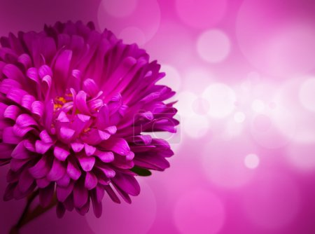 Flower, defocused lights on background