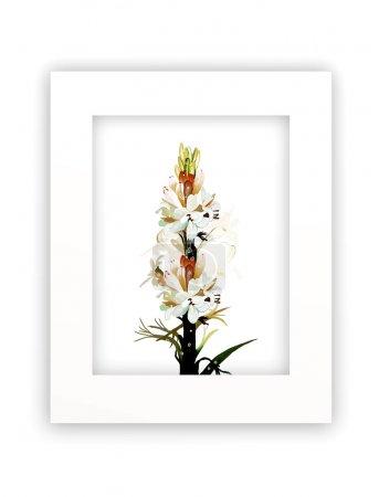 Tuberose Flowers in White Frame