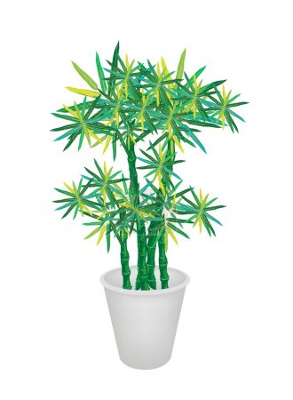 Green Bammboo Tree in A Flower Pot