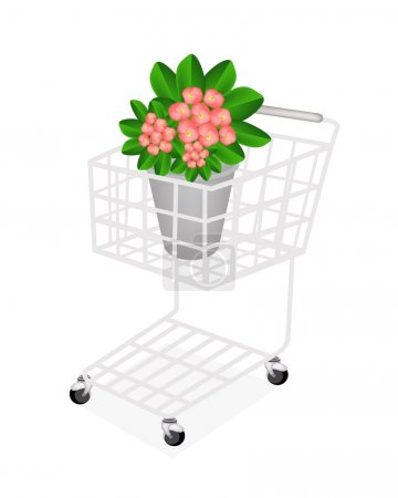 Fresh Crown of Thorns in A Shopping Cart