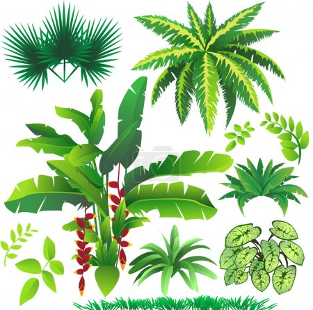 Illustration for Vector illustration of many plant leaves - Royalty Free Image