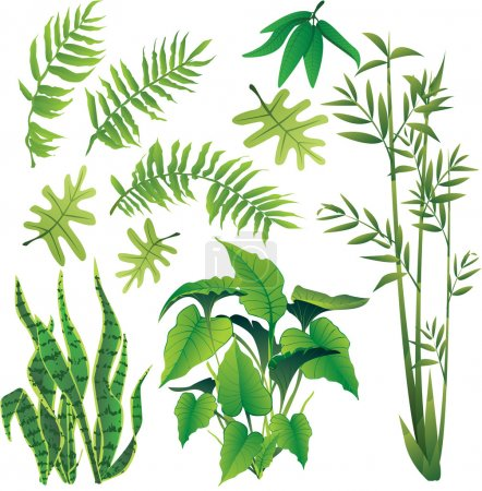 Illustration for Exotic plant leaves design element vector collection set - Royalty Free Image