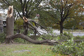 Trees collapsed