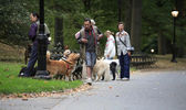 Early morning dog walkers in Central Park