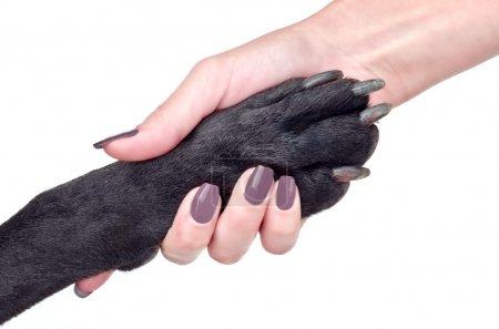 Photo pour Poignée de main amicale de femme et chien - image libre de droit