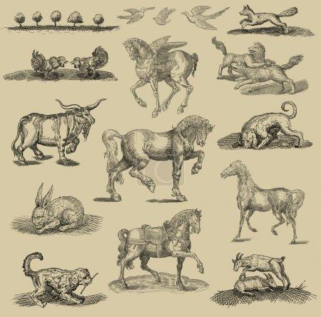 Animales set ilustración