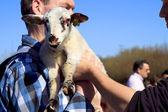 Man in blue shirt holding new born lamb