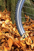 Bike wheel and tire tread with autumn leaves on the ground