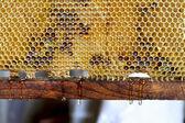 Fresh dripping honey