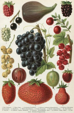"Different varieties of fruit. Publication of the book ""Meyers Konversations-Lexikon"", Volume 7, Leipzig, Germany, 1910"