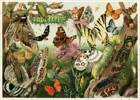 Various butterflies, moths, caterpillars and insect pests.
