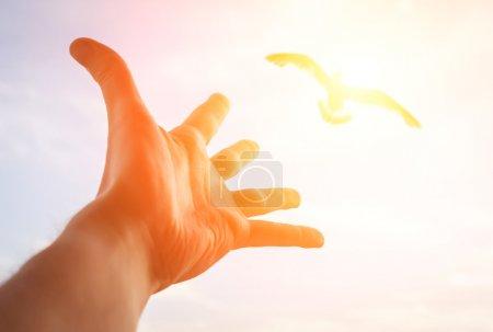 Photo pour Main d'un homme atteignant l'oiseau dans le ciel. Focus sélectif sur une main . - image libre de droit