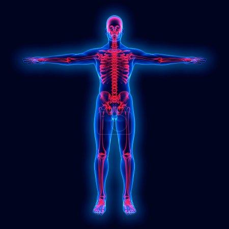 Human anatomy on xray