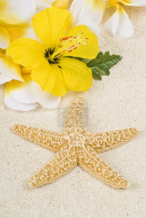 Foto de Estrella de mar y lei en la playa - Imagen libre de derechos
