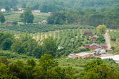 vinyard in a distance of virginia mountains